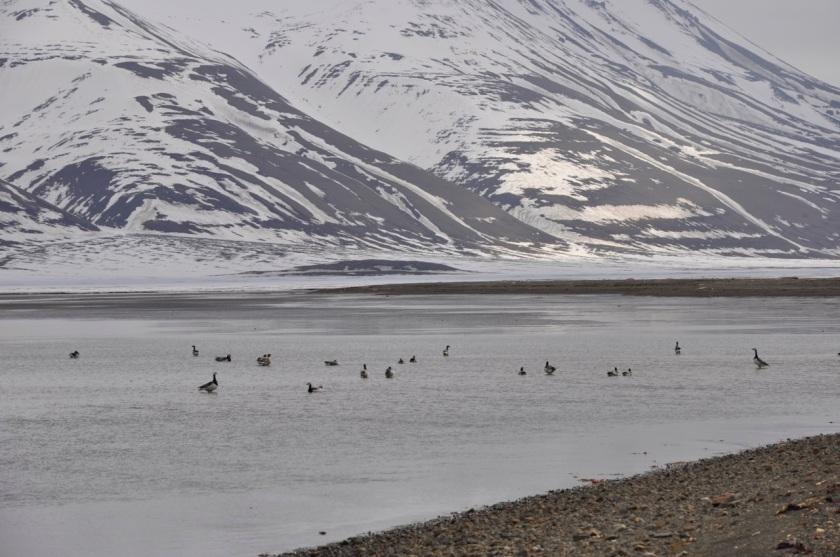 ptaki Svalbardu