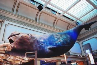 Natural History Museum, Waszyngton