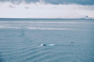 na rejsie po morzu Grenlandzkim