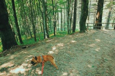 Spacer po Górze Parkowej