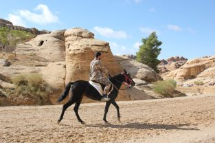Konna wycieczka w Petrze Jordania